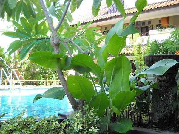 Bali Sorgawi Hotel Bali - Kolam Renang