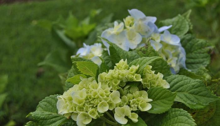 Bagus Arga Pelaga Bali - Daerah Agro bunga