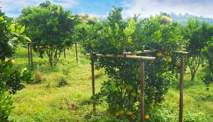 Bagus Arga Pelaga Bali - Agro Dekopon