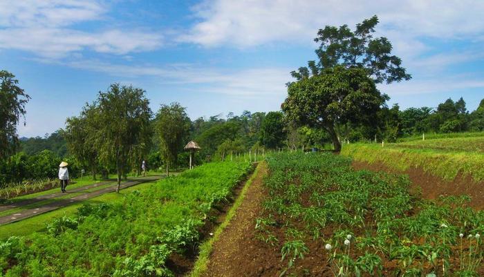 Bagus Arga Pelaga Bali - Pemandangan
