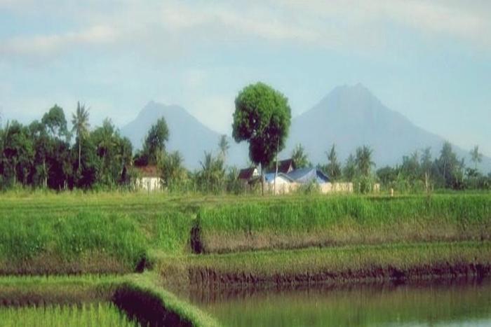 Kampung Osing Inn Banyuwangi - Pemandangan
