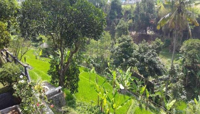 Alam Asri Hotel & Resort Cianjur - Pemandangan