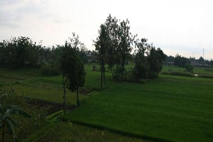 Rumah Kayen Yogyakarta - Pemandangan