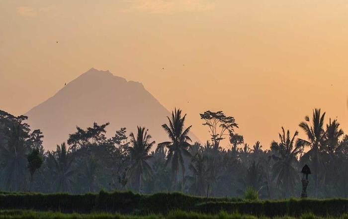 Manyi Village Ubud - Pemandangan