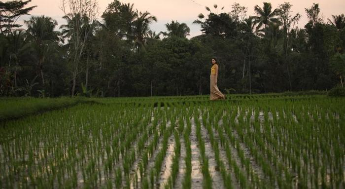 Alaya Resort Ubud Bali - Sekitar
