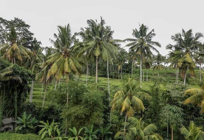 NIDA Rooms Ubud Pengosekan Mas Bali - Pemandangan Area
