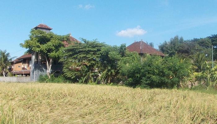 Villa Pecatu Ubud Bali - sawah