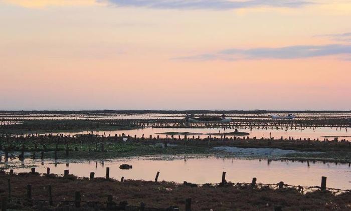 Dmas Huts Lembongan Bali - Seaweed Farm