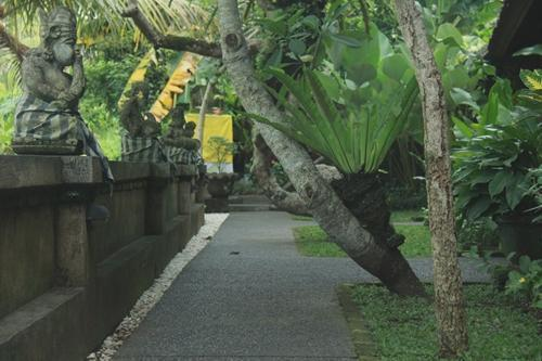 Jati Homestay Ubud - Pemandangan