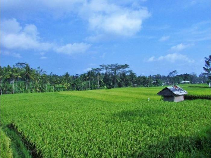 Temuku Villas Ubud - Gazebo
