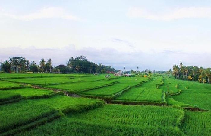 Greenfields Villa Bali - pemandangan