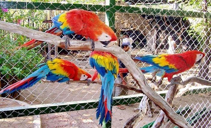 Gili Meno Bird Park Resort Lombok - (10/June/2014)