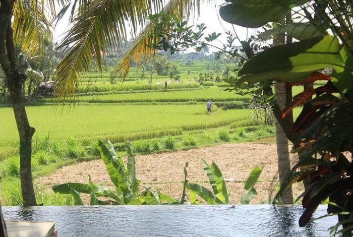 Ubud Padi Villas Bali - Property Grounds