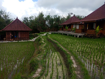 Ubud Sawah Homestay Bali - inside paddy bungalow basic deal