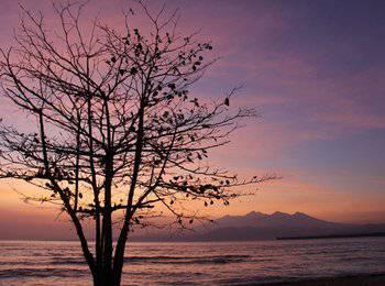 Seri Resort Gili Meno Lombok - Bungalow Garden View Regular Plan