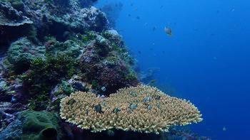 Wakatobi Patuno Resort Wangi-wangi - Suite Room + Diving Package 5D4N Regular Plan