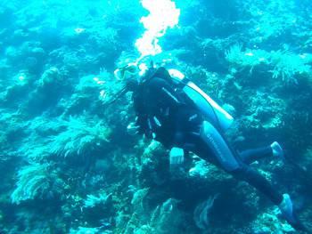 Wakatobi Patuno Resort Wangi-wangi - Suite Room + Diving Package 4D3N Regular Plan