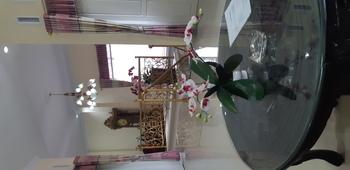 Darra Homestay Toraja Utara - Full House hingga 12 orang Regular Plan