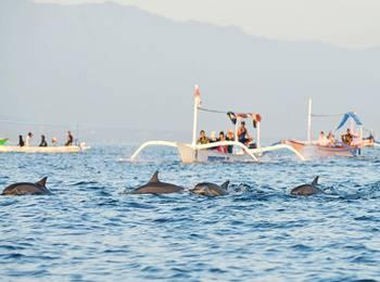 Pop Hotel Singaraja Bali - POP Dolphin Package Regular Plan