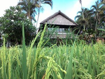 Pondok Saraswati Villas Ubud