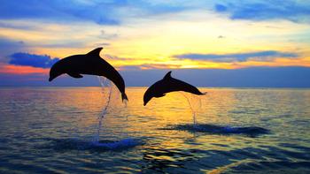Aditya Beach Resort Bali - Superior Room with Dolphin Tour Basic Deals