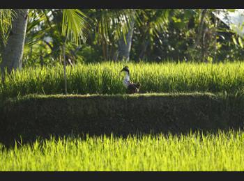 Luxe Villas Bali - Padi Suite Hemat 50%