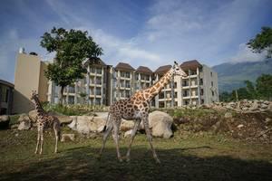 Baobab Safari Resort Pasuruan - Eksterior