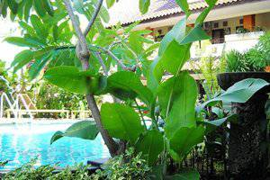 NIDA Rooms Kuta Legian Beach Bali - Kolam Renang