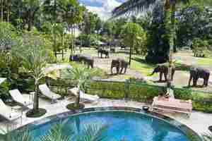 Elephant Safari Park Bali - Kolam Renang