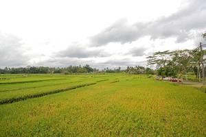 Puri Wulandari Ubud - Lingkungan Sekitar