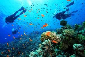 Pelangi Lake Resort Belitung - Menyelam