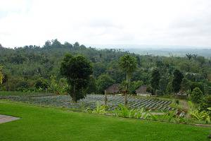 Bagus Arga Pelaga Bali - Agro sayuran area dan sekitarnya