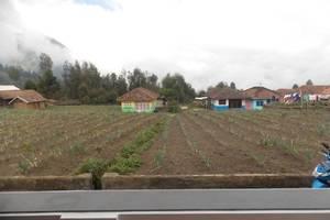 Homestay Firdaus 2 Gunung Bromo Probolinggo - View