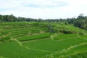Villa Semana Resort & Spa Bali - VS - Rice Field at Reception-HR-OK