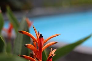 Front One Inn Kediri Kediri - The Melody Swimming Pool
