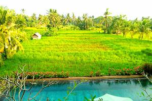 Inata Bisma Bali - Rice Field View