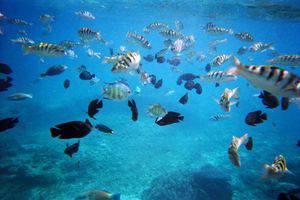 Bali Sunset Villa Bali - colourfull fish