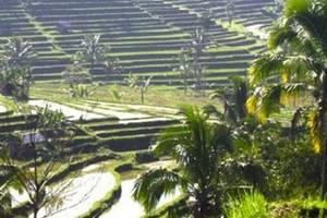 Puri Sunny Hotel Bali - Munduk Rice Terrace