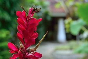 Nyima Inn Bali - other6