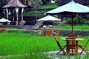 Hotel Murah Di Lowokwaru Malang Dengan Kolam Renang