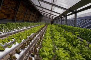 Greenhost Hotel Jogja - Roof top hydroponic