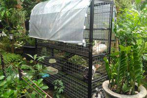 Bogor Homestay Bogor - kelinci