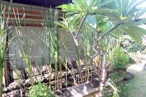 Citrus Tree Villas - Shana Bali - Taman