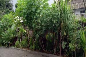 Bunga Lestari Bali - Eksterior