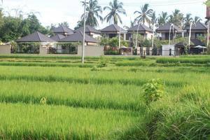 Onje Villa Ubud - Pemandangan