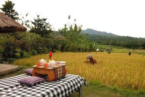 Puri Bagus Manggis Hotel Bali - Rice Field View