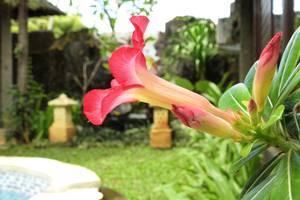 Villa Happy Jimbaran Bali - Taman