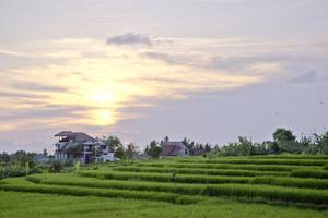 Paddy View Villa Bali - Pemandangan