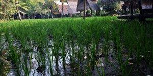 Sapu lidi Resort Hotel Bandung - Restoran