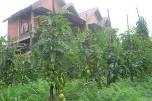 Istana Petani Hotel  Probolinggo - Eksterior